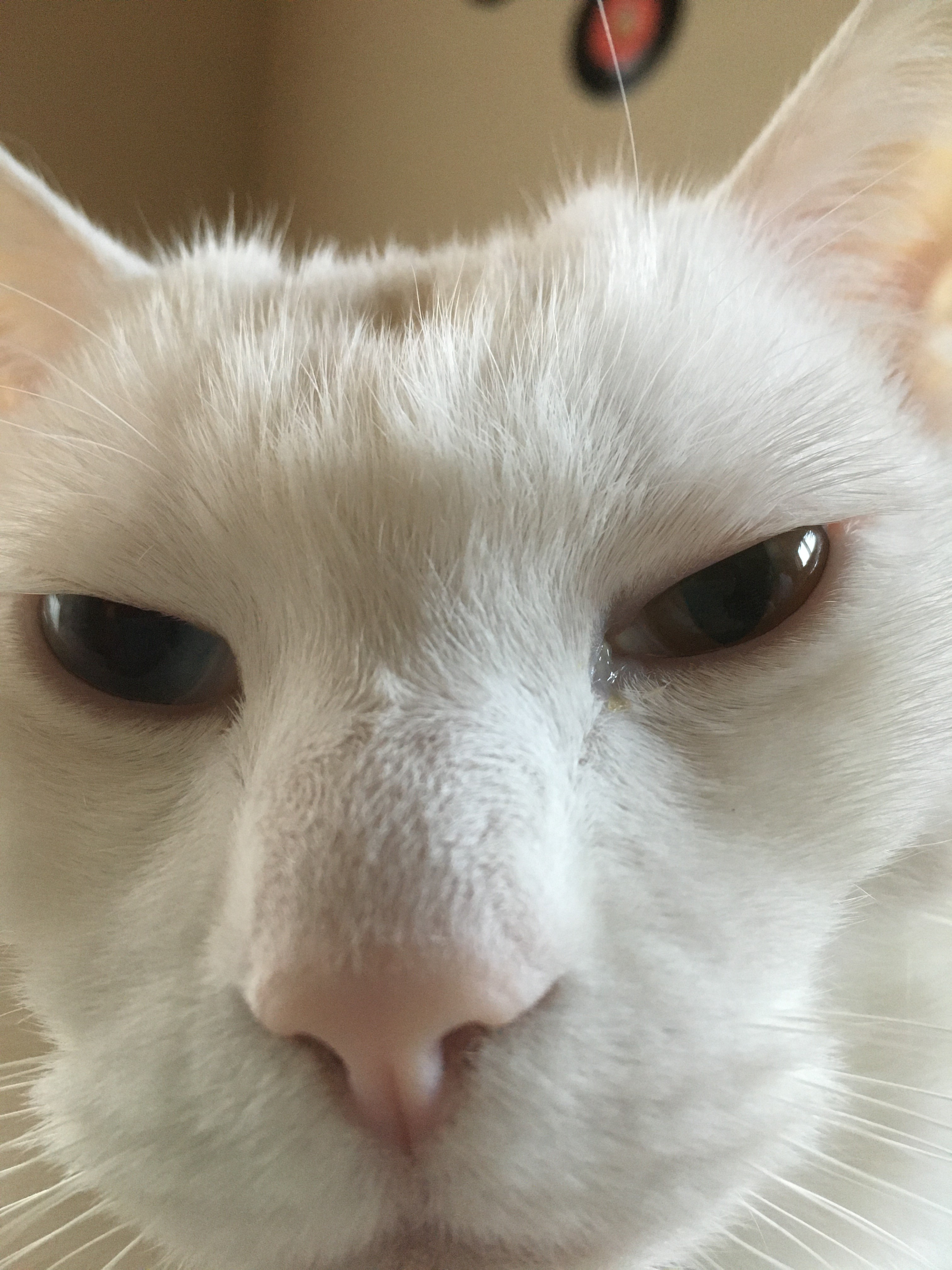 猫イマイチ